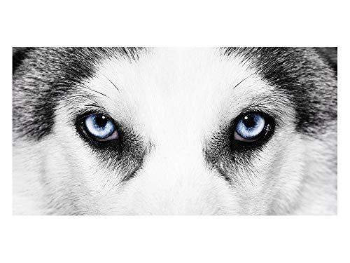 GrazDesign privacyfolie Husky – honden/ogen | glasdecoratiefolie voor decoratie | ondoorzichtig raamfolie