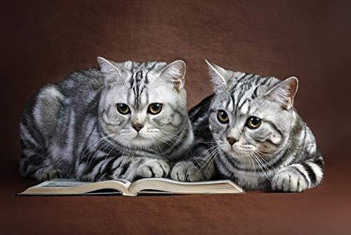 znwrr Rompecabezas Divertidos, Libro de Lectura de Pareja de Gatos Juntos Adultos Imagen de Rompecabezas de cartón, Juego de Entretenimiento de Ocio Toy-1000 Piezas 38x26cm