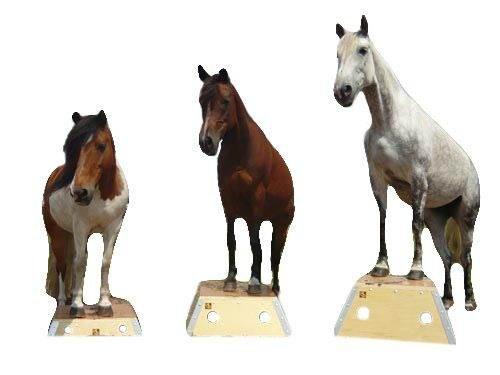time4horses Pferde Podest Pferdepodest Bodenarbeit Zirkus Podest Zirkuspodest