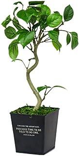 Fppオリジナル ベンジャミン 光触媒 フェイクグリーン 造花 観葉植物 おしゃれな器でそのまま飾れる FPP-807