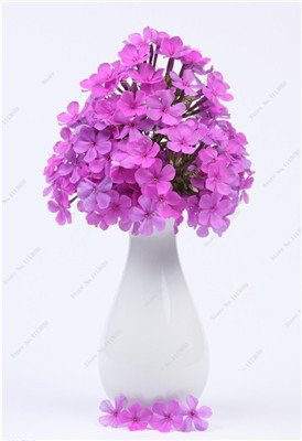 Verbena hybrida Graine verveine Hortensis Bonsai Flowr semences Balcon intérieur Plantes jardin Fleurs colorées Woodland 100 Pcs 6