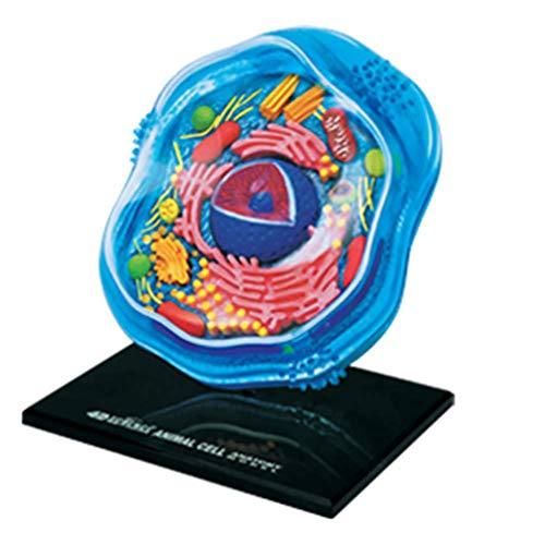 4D Master Puzzle Zusammenbau Spielzeug Biologisch Tier Cell Organ Anatomie Medizinisch Lehren Modell 24 STÜCKE