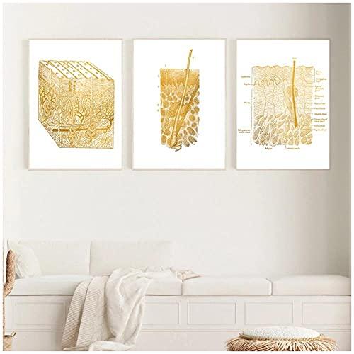 FUXUERUI Gold Skin Anatomy Disección Histología Gráficos anatómicos Impresión en lienzo Carteles Cuadros de pared para educación médica Decoración del hogar,40x60cmx3 Sin marco