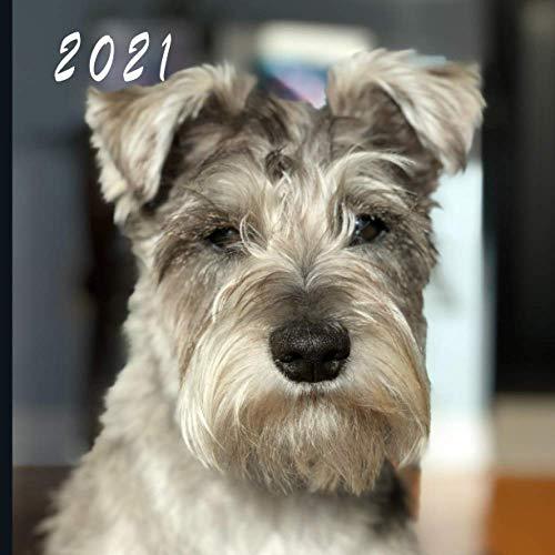 2021: Monthly Photo Calendar | January 2021 - December 2021 | Monthly Calendar with U.S./UK/ Canadian/Christian/Jewish/Muslim Holidays | Cute Schnauzers Dog Puppy Photo Calendar
