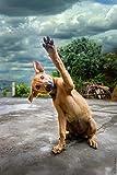 Pintura por Números,Perro mascota animal,DIY Pintura al óleo Colorido Pintar Kit de,Lienzo Preimpreso de con Pinceles y Pigmento Acrílico (16 X 20 Pulgadas,Sin Marco)