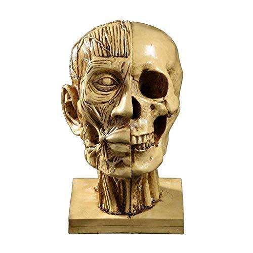 Escultura modelo cabeza humana enseñanza médica