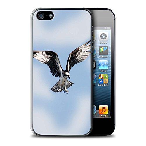 Custodia/Cover/Caso/Cassa Rigide/Prottetiva STUFF4 stampata con il disegno Uccello Rapace per Apple iPhone 5/5S - Falco Pescatore