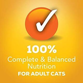 شراء Purina Friskies Tasty Treasures Adult Wet Cat Food Variety Pack