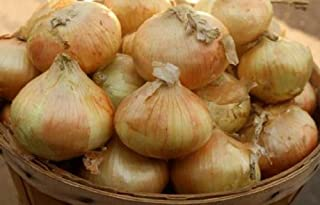 Sweet 'Candy' Onions from Organic Mountain Farms (10 Lbs.)