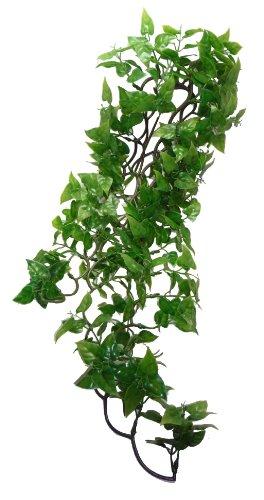 Komodo Philodendron