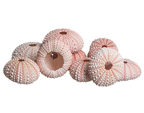 Sea Urchin   10 Pink Sea Urchin Shell  10 Pink Sea Urchin Shells for Craft and Decor   Plus Free Nautical eBook by Joseph Rains