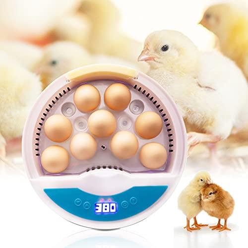 TELAM Incubadora de huevos: 9 celdas para incubar automáticamente huevos en el hogar, de aves de corral con medición de temperatura, luces LED hasta 9-12 huevos, gallina, pato, ganso, incubadora