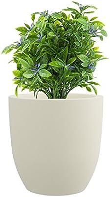 Yuccabe Italiaitalia P Cup Large