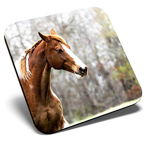 Great Single Coaster Square - Beautiful Brown Horse Equestrian Pony Glossy Quality Coasters  Tabletop Protection for Any Table Type 8759