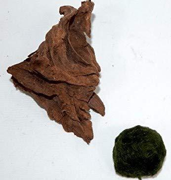 SAHAWA Wurzel,Mangrovenwurzel, Mangrove, Aquariumwurzel+ Mooskugel Gratis Aquarium, Terrarium Deko ca. 12-15 cm