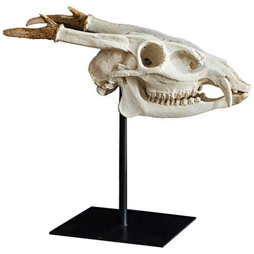 Escultura Decorativa Cráneo resina Replica cabeza del dinosaurio estatua realista modelo de la decoración esqueleto - Muestra de hogar y oficina Decoración Estante fósil prehistórico mesa de estudio D