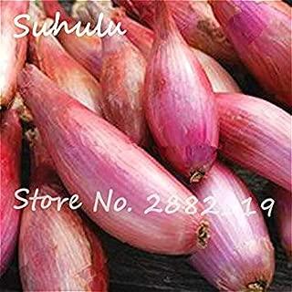 Bshopy 10pcs de jujube fruits Graines V/éritables jujube de graines exotiques Bonsa/ï naturel Sain beau facile D/élicieux organique Vivace plante grandir