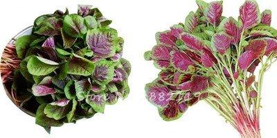 Herb Amaranthus Tricolor Seeds 50 Pcs graminée Semente non Ogm végétale comestible Bonsai Plante en pot alimentaire sain doux 9