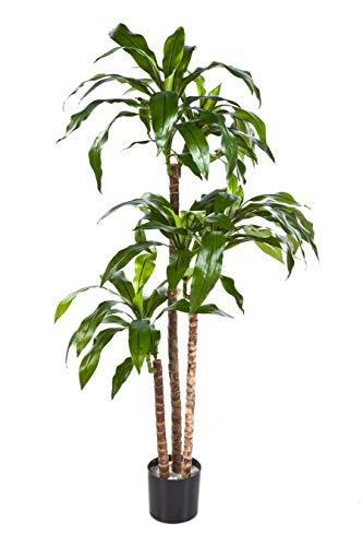 artplants.de Set 'Dracaena Fragrans sintética + Spray de protección UV' - Drácena de plástico Laura, Troncos Naturales, Verde, 150cm