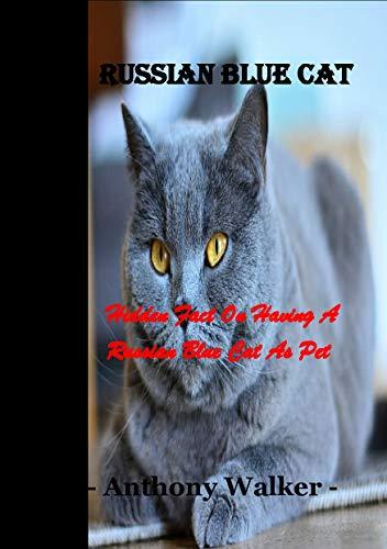 Russian Blue Cat: Hidden Fact On Having A Russian Blue Cat...