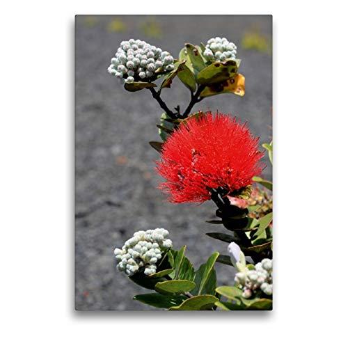 CALVENDO Premium Textil-Leinwand 50 x 75 cm Hoch-Format Endemische Blume im Lavafeld - Big Island, Leinwanddruck von Florian Krauss