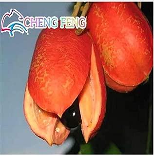 Buy 3 get 2 Free Rare Seeds of ackee Fruits 1 pcs True Garden Seeds Fruit