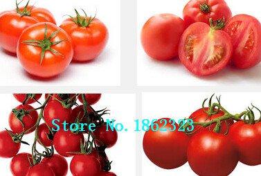 Graines 1bag tomate 100 Violet tomate Graines de légumes Lycopersicon Esculentum B037 ``