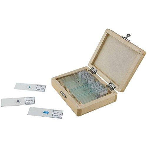 Prepared Microscope Slides 25 ct. Electronic Computer