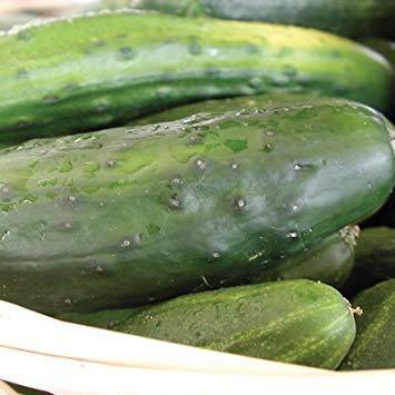FERRY Keim Seeds: 1 Gramm Samen von Hausgemachte Pickles s