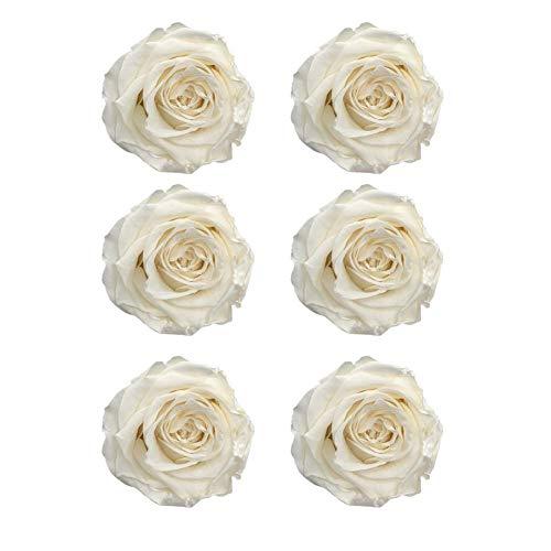 CAN_Deal 6er-Pack konservierte Rosen - Infinity-Bloom Rosenköpfe - Kopf-Ø ca. 5-6 cm, Weiß