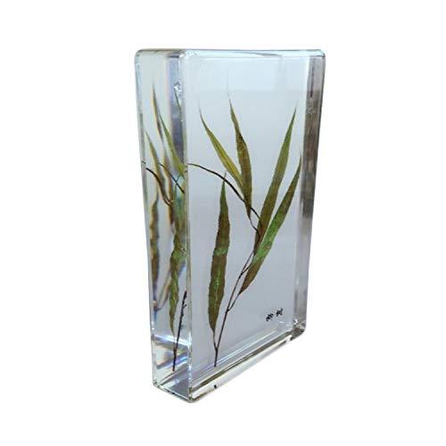 FXQ Eingebettetes Exemplar der biologischen Pflanze - Paprika/Chinesische Yamswurzel/Weide/Mungobohne Exemplarmodell - Konservierte biologische Pflanze für naturwissenschaftliche Ausbildung,Willow