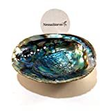 NESSASTORES - Green Abalone Sea Shell One Side Polished Beach Craft 6' - 7' #JC-018 (1 pc)