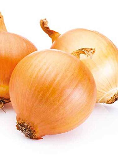Germisem Valenciana Tardia Semillas de Cebolla 3 g