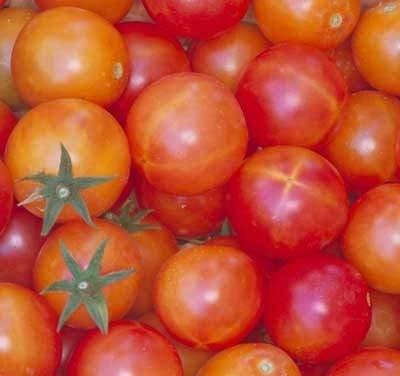 30 graines d'Isis Candy - Tomates fructifié
