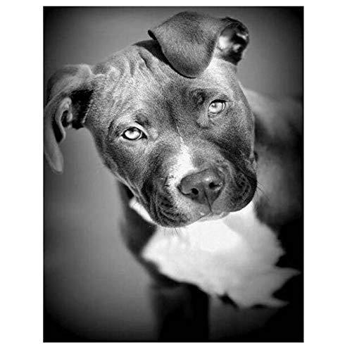 5d DIY diamant schilderij volledige ronde boor zwart en wit put stier hond diamant borduurwerk dier Pitbull honden strass mozaïek gift