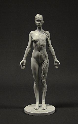 Female Anatomy Figure: 10.5-inch Anatomical Reference for Artists (Grey)