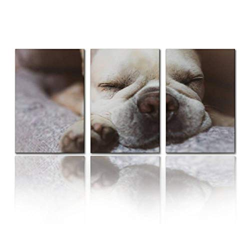 SALIZEN Adorable Sleeping Frenchie 3 Pieces Wall Art Paintings Perfect Canvas Art Vivid Color Modern Style Home, Living Room, Bedroom, Hotel Decoration Gift
