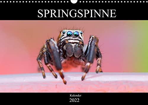 Springspinne Kalender (Wandkalender 2022 DIN A3 quer)