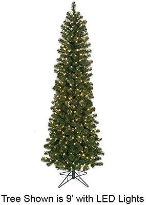 25 Virginia  pine tree seedlings fresh green 6 to 12 inches tall Christma tree