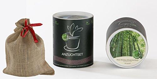 Seedeo Anzucht-Geschenkset Moso Bambus (Winterharter Riesenbambus) Phyllostachys edulis