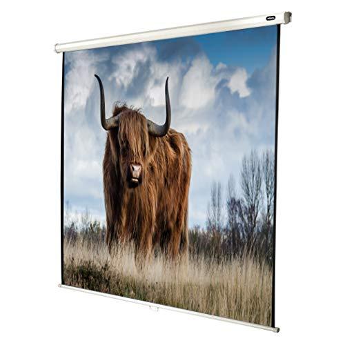 celexon manuell ausziehbare Heimkino- und Business-Beamer-Leinwand 4K und Full-HD Rollo-Leinwand Economy - 160 x 160 cm - 1:1 - Gain 1,0