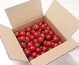 山梨県南アルプス市より「あまーいフルーツトマト」お届けします。トマ糖「太陽のめぐみ」(無選別1kg)