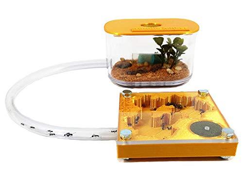 Anthillshop.es Hormigueros educativos 3D 7x7 Color Oro con Caja de forrajeo (Hormigas Incluidas Gratis, de 20 a 30 obreras).
