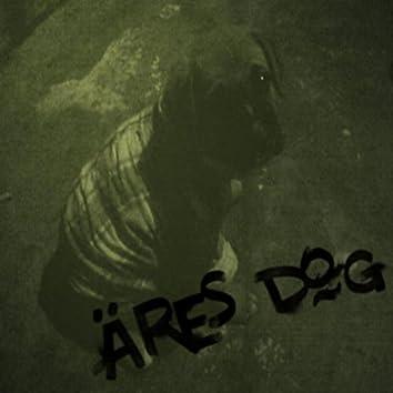 Street Dog (En Vivo)