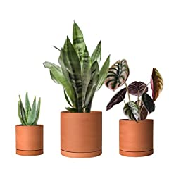 Classic Terracotta Pots - naturally smooth matte finishing. Round Cylinder Design - porous terracotta clay material for succulent plants. Dimensions - 4.2 inch, 5.3 inch, 6.5 inch, perfect size for small cacti, succulents and more. Drain & Saucer - S...