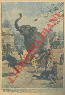 Un elefante che stava passeggiando all'interno del Giardino Zoologico di Basilea uscì improvvisamente. Irritato dalla vista della folla impaurita si rifugio' infine in un giardino, dove venne cattur