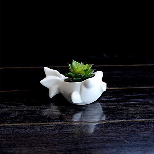 Chengcheng Mini Plante Verte en Forme de Fleur succulente Pot en céramique Blanche Joli Poisson Fleur Pot Pot de Regards de Bureau à Domicile,avec
