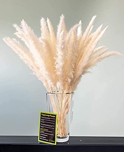 felani® Pampasgras 30 Stück getrocknet - weiß I natürlich und besonders fluffig - echte Trockenblumen Wedel - Wohnzimmer Deko - Phragmites Communis