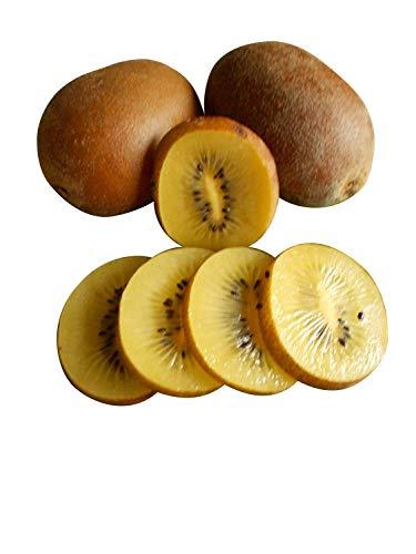 Kiwi Golden Tao, gelbe Frucht 20 Samen (Winterhart) RAR.