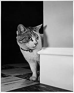 Best cat peeking around corner Reviews